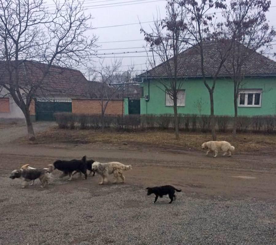 Front comun pentru oprirea abandonării câinilor