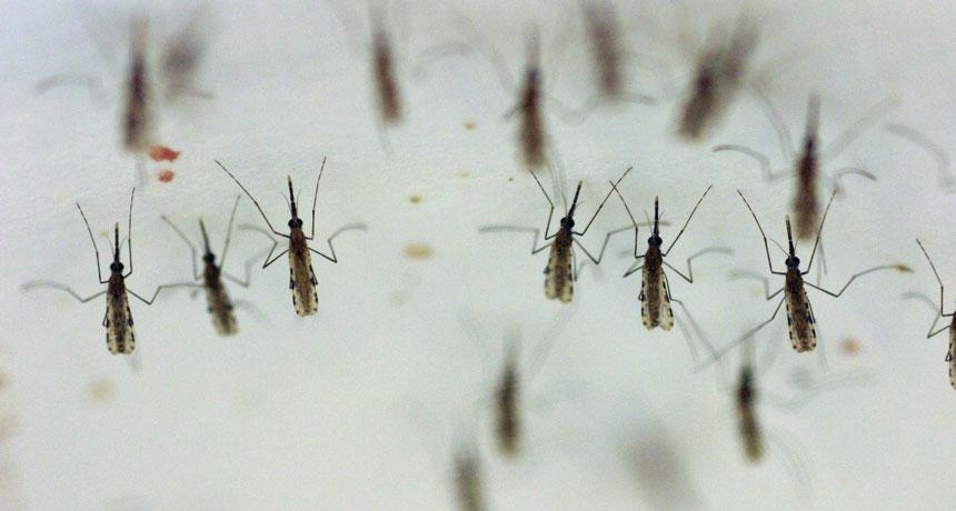 Astăzi şi mâine se stropeşte împotriva ţânţarilor