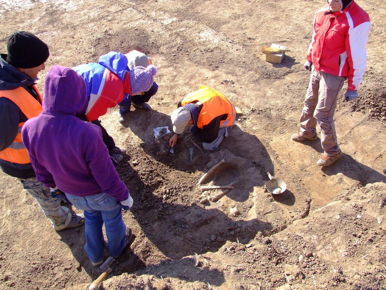 Schelete umane preistorice descoperite la Pecica, supuse investigaţiilor ADN