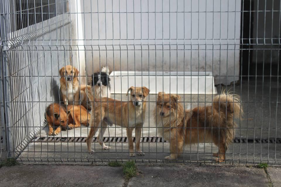 Târg de adopție de canină la Arad