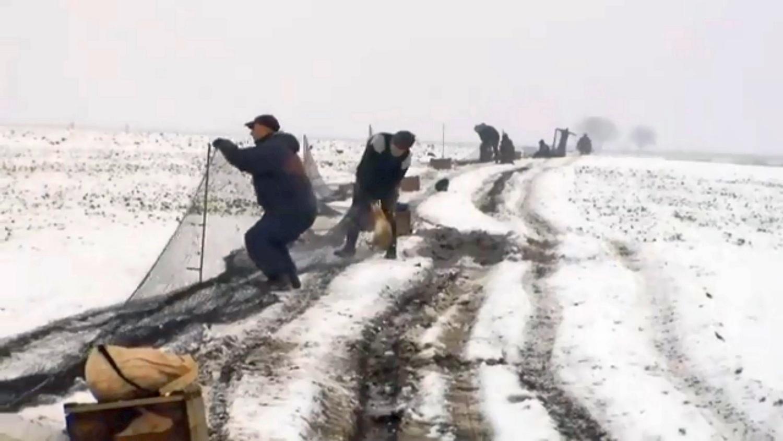Au prins 200 de iepuri sălbatici pe câmp