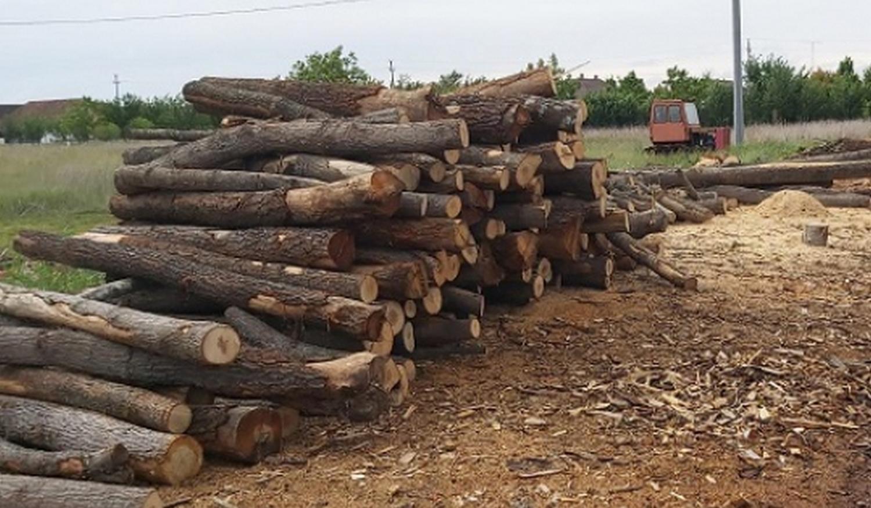 Amendă și material lemnos confiscat de la o firmă pecicană