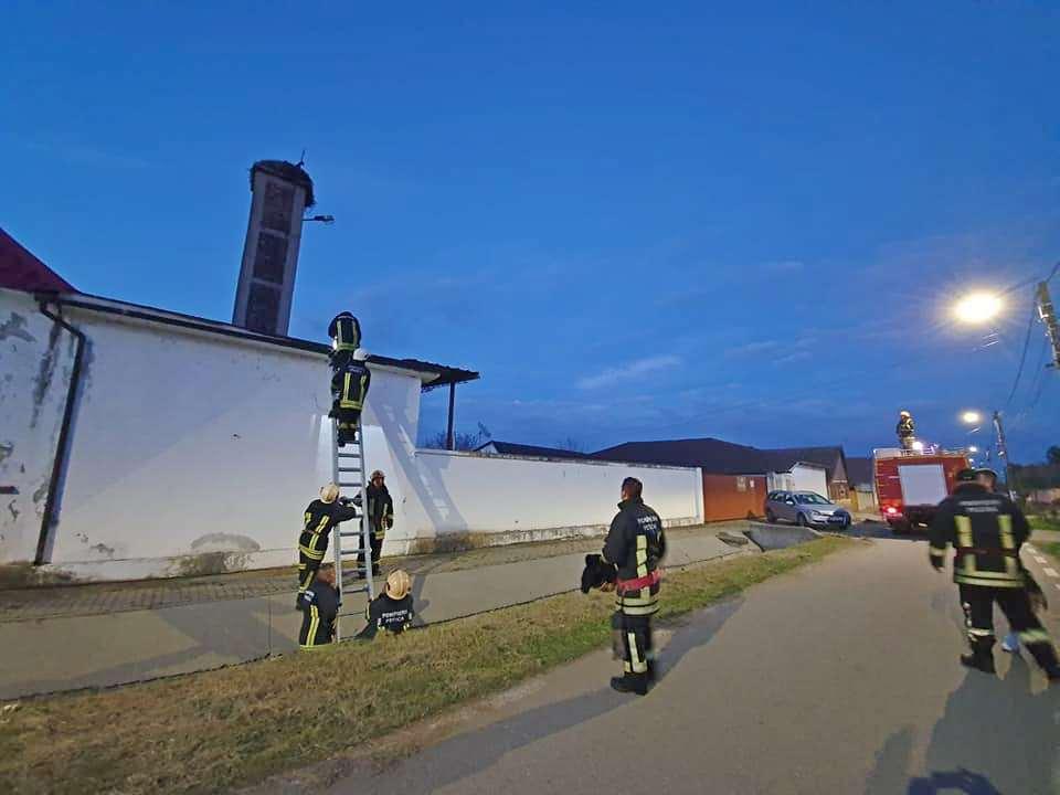 UPDATE: Barză salvată de pompieri, în ziua de Paște