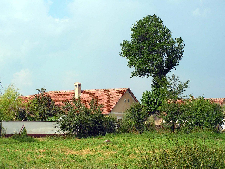 Bătrân dispărut de acasă, găsit la Bodrogu Vechi